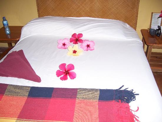 Atlantida Lodge: They're very small, but you can see the mouse droppings on the bed!!