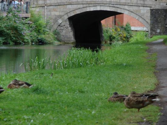 La Peniche: même les canards se plaisent sur ce magnifique & verdoyant cannal