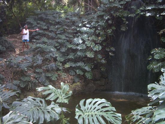Jardin Botanico Historico La Concepcion : Water Water Everywhere