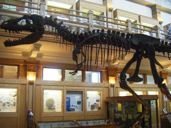 Musee Redpath: The largest exhibit, a dinosaur skeleton