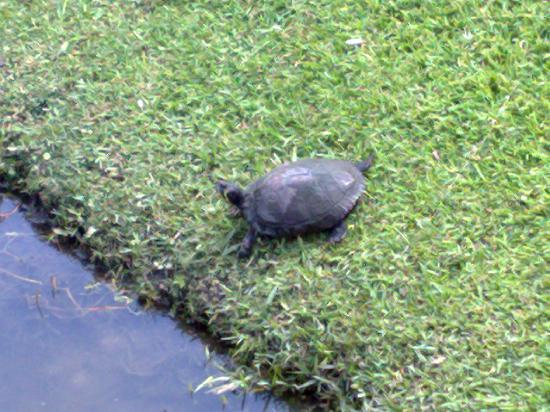 Holiday Inn Express Hotel & Suites Charleston/Ashley Phosphate: pond life next door