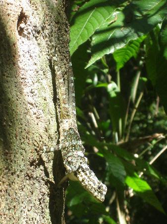 Refugio Amazonas: a friendly lizard
