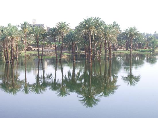 Lembah Sungai Nil, Mesir: Palm Tree Reflection on River Nile