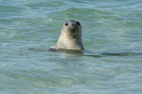 Orkney Islands, UK: she followed us along the beach