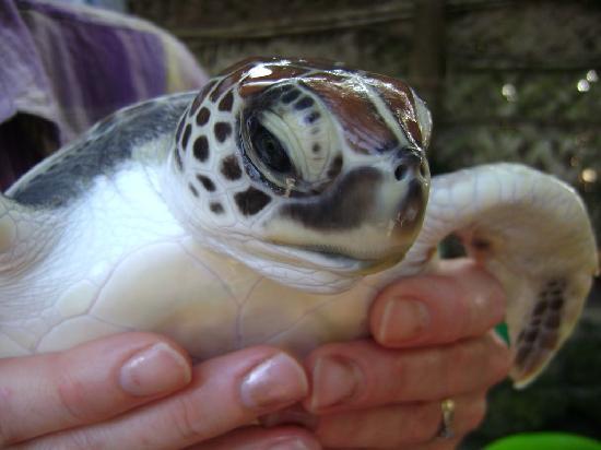 Flame Tree Cottages: The turtles at Mnarani aquarium