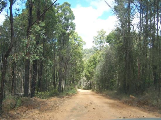 Blackwater, Australia: road towards the mountains