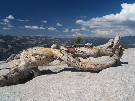 Sentinel Dome : Top of Sentinel