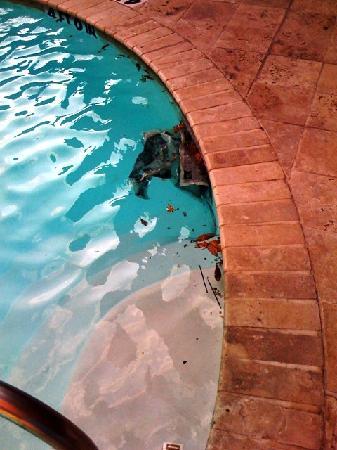 Hotel ZaZa Houston: zaza pool
