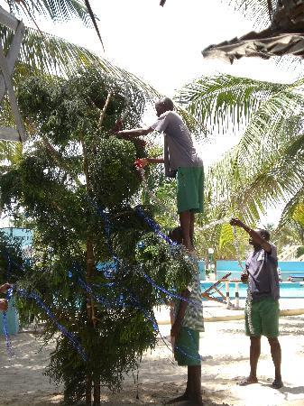 Jacaranda Beach Resort: l'albero di natale in spiaggia.. finito era stupendo!!