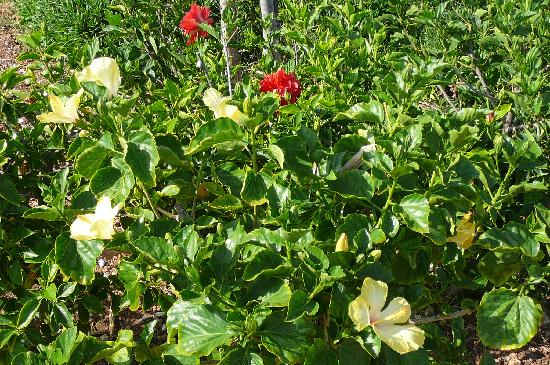 VOI Arenella resort : Garten