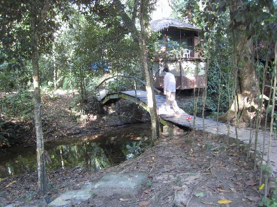 Jungle Palace: Path to cabanas