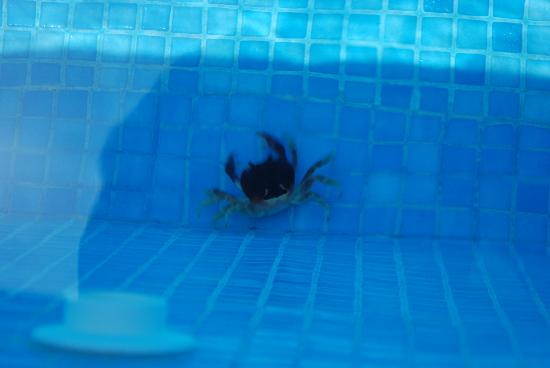 Excellence Playa Mujeres: a crab friend in the pool   :)