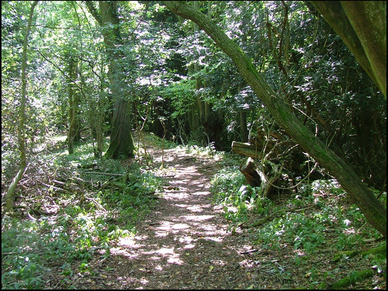 Wye Valley and Forest of Dean: Offa's Dyke Path
