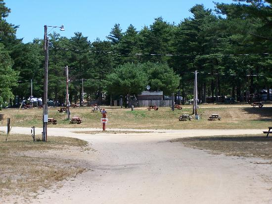 Ellis Haven Campground: unshaded tent sites