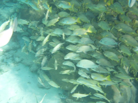 "Hol Chan Marine Reserve: a ""wall"" of fish"