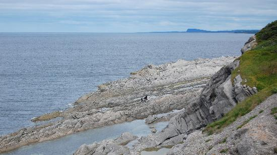 Cow Head, Kanada: The shore on the old lighthouse hike