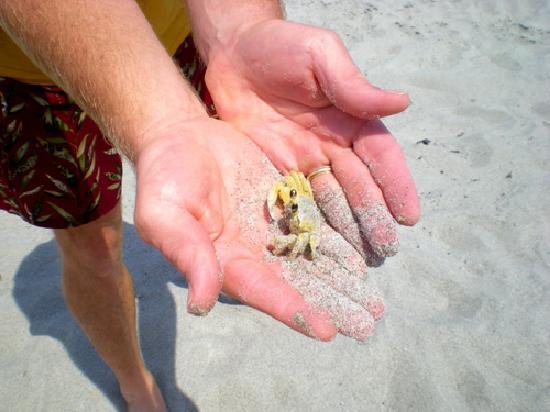 The Resort on Cocoa Beach: Crab!!  Isn't he cute!