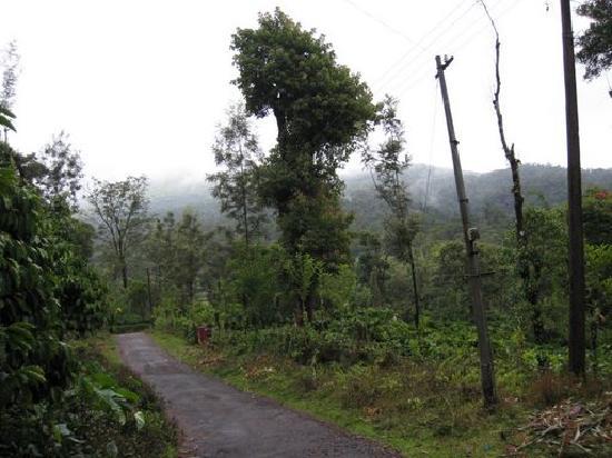 Naladi Holidays: Coffee estate near homestay