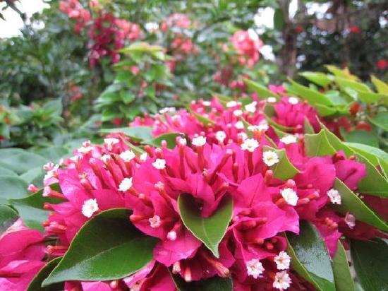 Naladi Holidays: homestay garden