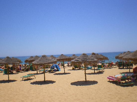 Oasis Village Apartments: beach at the marina