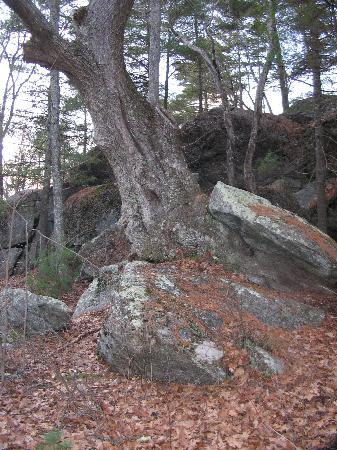 Rock House Reservation: Trees growing out of rock
