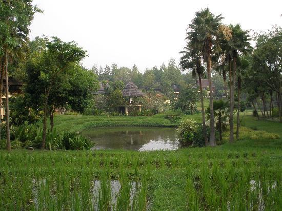 Lana Thai Villa: Eleganz im Reisfeld