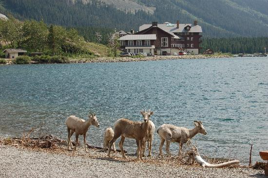 Swiftcurrent Motor Inn And Cabins: Many Glacier Hotel
