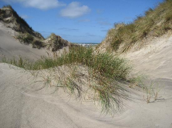 Munchs Badehotel: the dunes