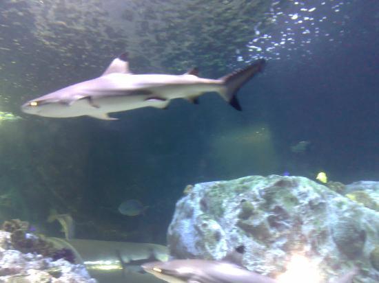 Sea Life Aquarium : 1