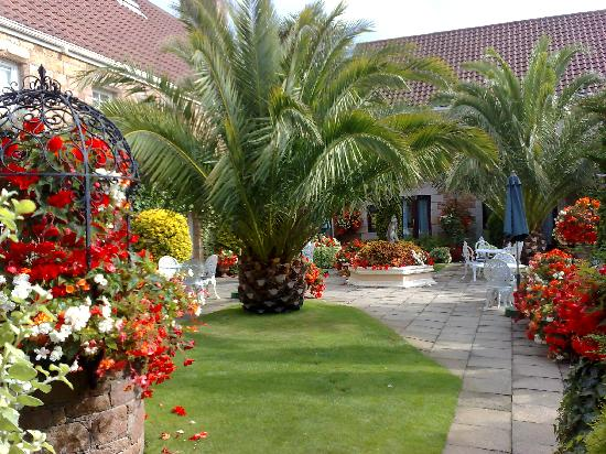 Greenhills Country Hotel: The stunning Palms in front of the hotel