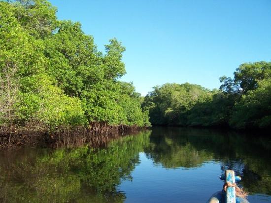 San Miguel, El Salvador: Manglar en la Chepona