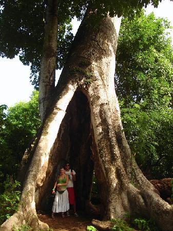 Decameron Maryland: El árbol Hueco
