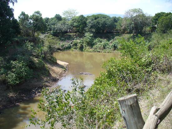 Fairmont Mara Safari Club: Tents are located on the Mara river - home to hippos