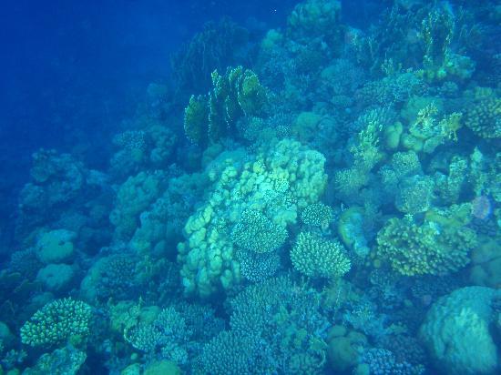دهب, مصر: The reef outside the Hotel Nesima in Dahab