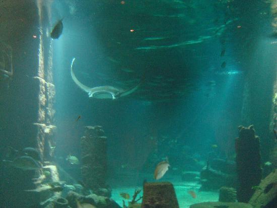The Reef Atlantis, Autograph Collection: the underwater aquarium
