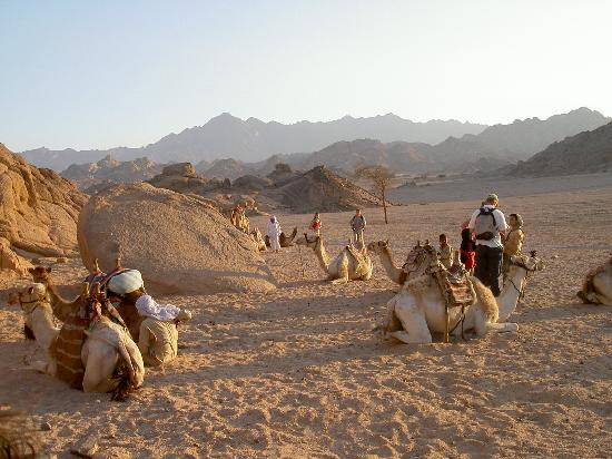 Eastern Arabian Desert Hurghada 2018 All You Need To