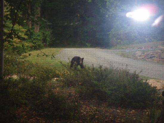 The Inn at Sugar Hollow Farm: Bear at Sugar Hollow