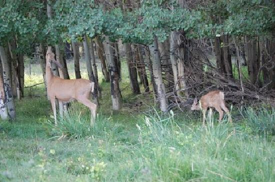 Deer greeted us at Spirit West River Lodge B&B