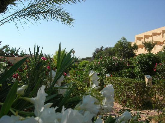 Club Oasis Marine: Jardin et appartements