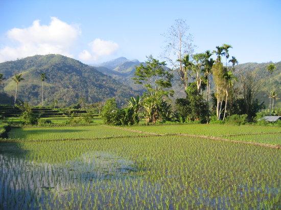 Flores, Indonesia: panorama autour de l'hôtel