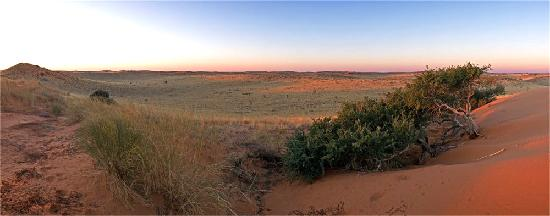 Kgalagadi Transfrontier Park, South Africa: 25 km North from Two Rivers: sunset over the red Kalahari Dunes.