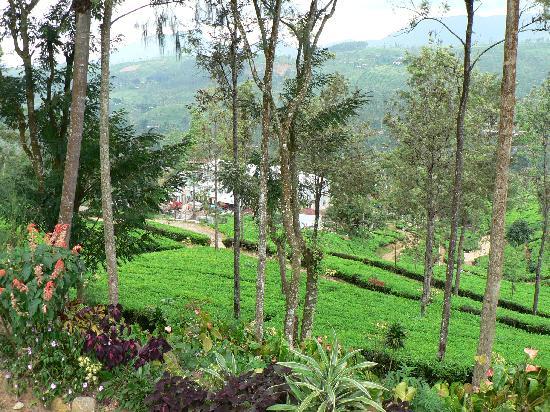 Ceylon Tea Trails: Views of the Tea Plantation