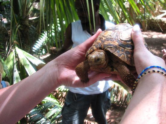 Pinewood Beach Resort & Spa: Boka Boka Reptile Park near Pinewood
