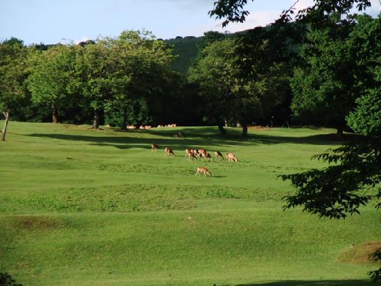 Mt. Wakakusa: Deer Park