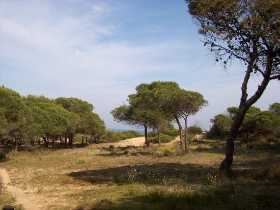 Guardamar del Segura, İspanya: Pine forest at Guardamar