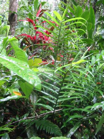El Tucan Jungle Lodge: un coin du jardin