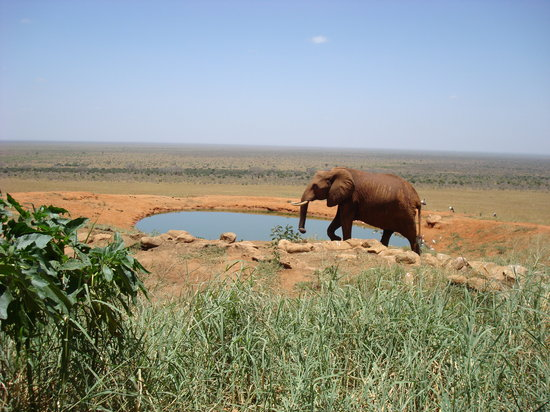 Tsavo National Park East, Κένυα: Elephant Tsavo East