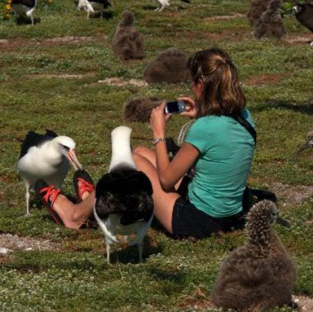 Sitting with Albatross