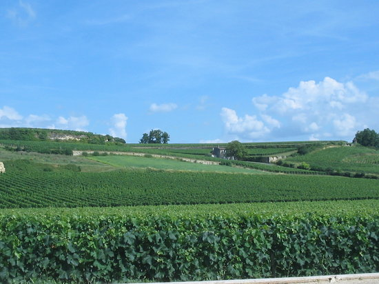 Saint-Emilion, Fransa: Typical view