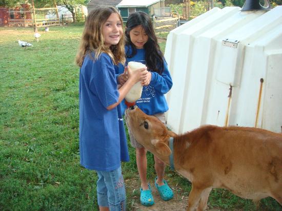 Olde Fogie Farm: Farm Life